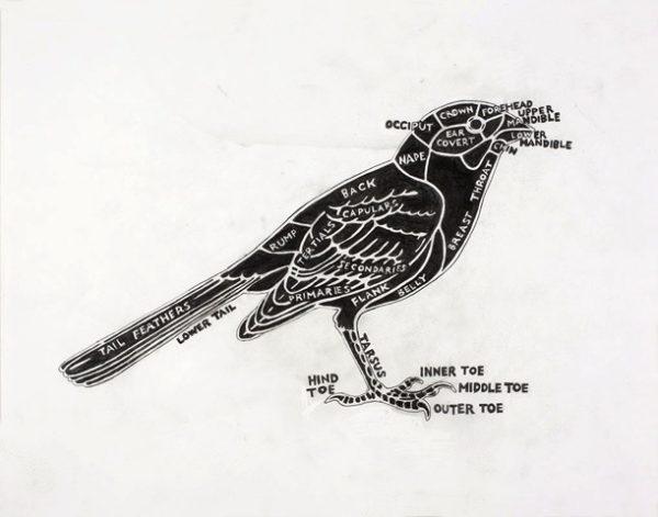 YOUNG_LIz__Bird2